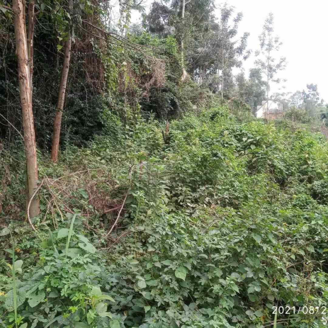 Kiambu road land for sale in Muthithi