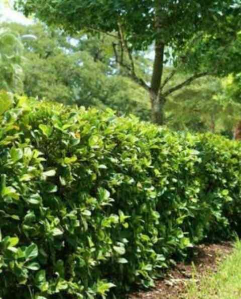 Land for sale in Runda Evergreen