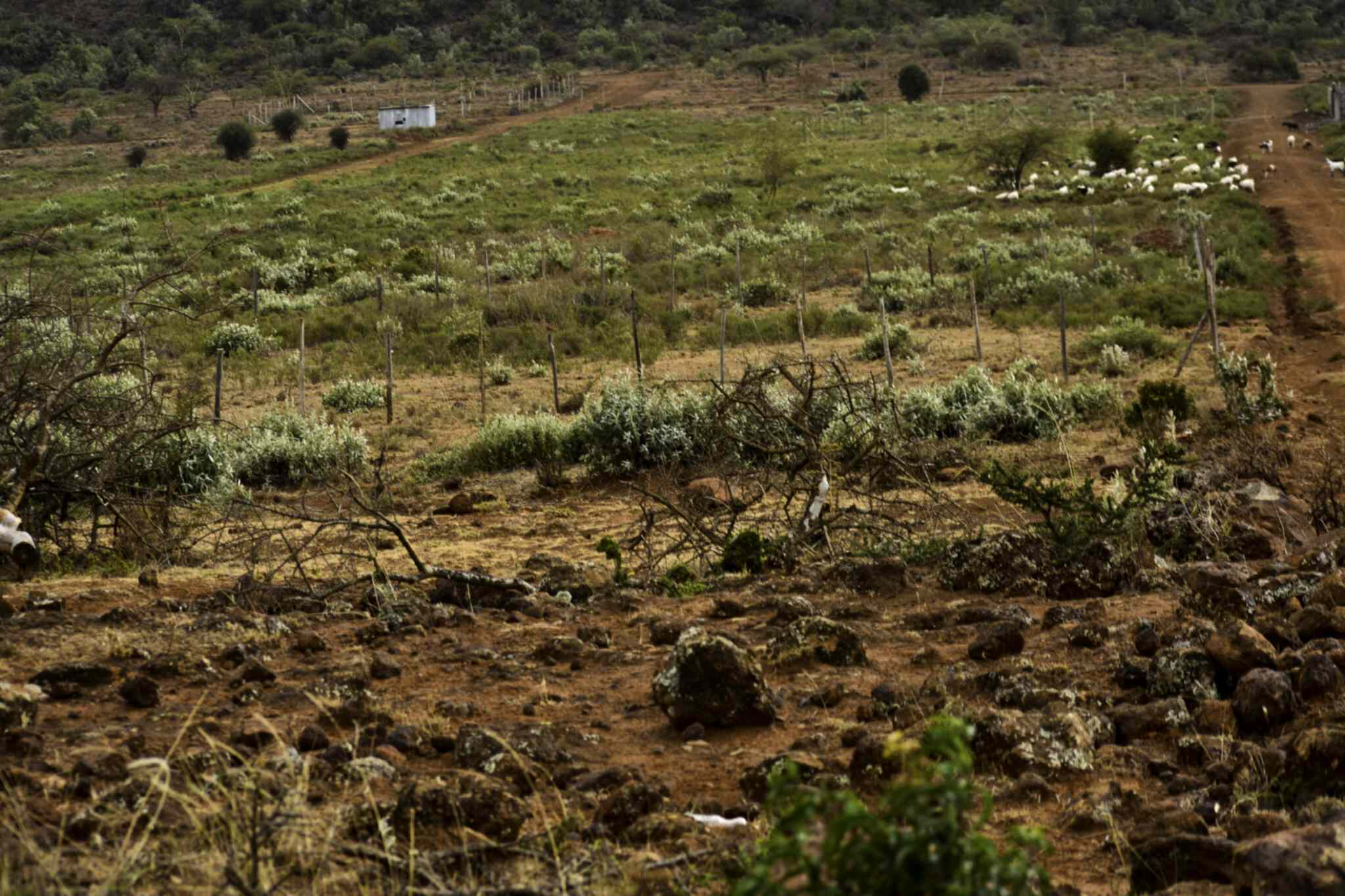 Plot for sale in Kimuka Ngong